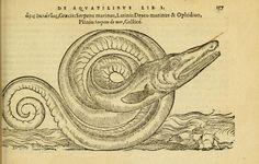 Title Petri Bellonii Cenomani De aquatilibus, libri duo cum [epsilon, iota] conibus ad viuam ipsorum effigiem, quoad eius fieri potuit, expressis ...