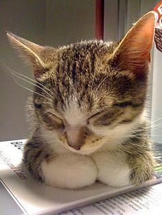 #cat #gato