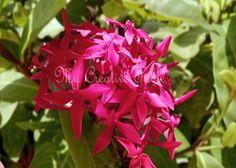 Digital Download Vibrant Fuchia Flower  by MyCreativeTable on Etsy