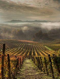 Langhe in autunno, Piemonte, Italy