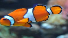 Fish! might be one of the many attractions drawing you to look for your dream property in Chelsea London. You may know the area well of you may still be weig...