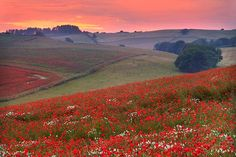 pagewoman:  Cranborne Chase and West Wiltshire Downs, Englandvia natureflip