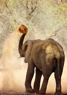 Photos show a love for Namibia, with its majestic dunes and wild animals. For your own special holiday to Nambia, visit us at www.parkersafricantravel.com
