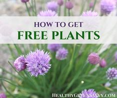 Organic Gardening Ideas get free plants - Don't spend a fortune on your garden! There are some easy ways to get free plants and get your garden going on the cheap! Find out how. Growing Rhubarb, Growing Spinach, Perennial Vegetables, Organic Vegetables, Growing Vegetables, Dehydrated Vegetables, Strawberry Companion Plants, Grass Alternative, Elderberry Plant