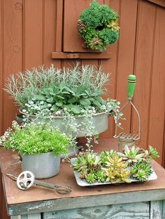 "Stunning Low-Budget Container Gardens : Outdoors : Home & Garden Television.  Super cute ideas for container planting. Paint cans, old hats/purses coffe pots tons of ""junk"" that people usually have in the free pile or super cheap at the thrift store"