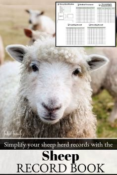 Simplify your sheep herd records with the Sheep Record Book! Raising Farm Animals, Raising Goats, Cattle Farming, Livestock, Wildlife Photography, Animal Photography, Sheep Shelter, Sheep Face, Sheep And Lamb