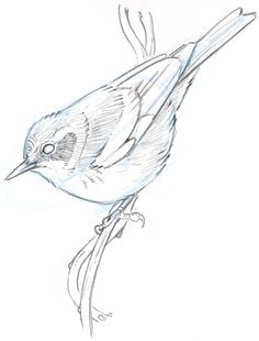 warbler feather - Google Search