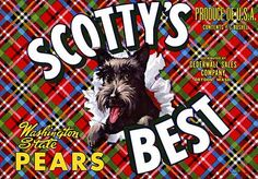 This fruit crate label was used on Scotty's Best Pears, c. 1940s: 'Scotty's Best Washington State Pears. Produce of U.S.A. Contents 4/5 Bushel. Distributed by Gederwall Sales Company, Dryden, Wash.' C
