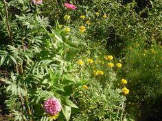 Herb companion planting list