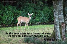 My Daily Bread Body and Soul | Pray … Cook … Blog