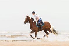 Die #Maven #Schabracke in #Marineblau ist perfekt für #Vielseitigkeitssättel. Die Schabracke ist #wellenförmig gesteppt und passend für #Pferde mit hohem #Widerrist. #Tottie #englishequestrian #english #equestrian #reiten #reiter #pferd #reitausrüstung www.englishequestrian.com
