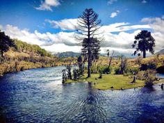 Río Icalma. Región de La Araucanía.