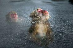 The Best Animal Photos