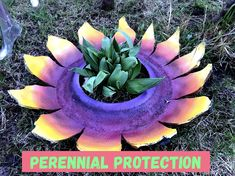 Add color to your garden and protection from lawnmowers , animals , and frost