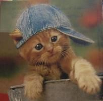 schattige katjes - Google zoeken