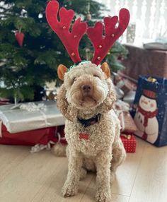 BRUNE PINNER | TRINES MATBLOGG Teddy Bear, Toys, Animals, Activity Toys, Animales, Animaux, Toy, Teddy Bears, Animal Memes