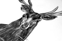 Deep forest by Lara Bispinck, via Behance #ElementEdenArtSearch