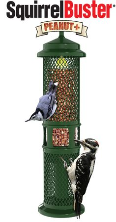 Squirrel Proof Hanging Wild Bird Nut Peanut Feeders Feeding Garden New Firm In Structure Yard, Garden & Outdoor Living