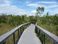 trail everglades shark valley floride