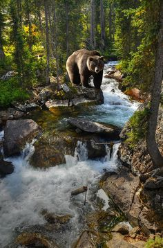 Bear Necessity #Tetons #Wyoming #Wildlife