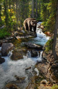 Bear Necessity #Tetons #Wyoming #Wildlife