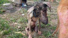 Abaixo-assinado · Gobierno Iraní: retire todos los perros abandonados y encadenados y deles atención veterinaria y un lugar donde vivir adecuadamente hasta que sean adoptados. · Change.org