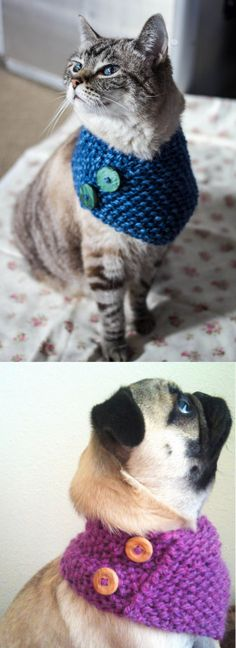 DIY Knit Cowl Free Pattern for Cats… and Small...