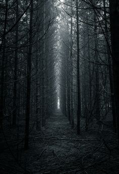 Dark Forest by Nikola Ostrun Look Wallpaper, Forest Photography, Landscape Photography, Ocean Photography, Photography Tips, Wedding Photography, Dark Fantasy Art, Dark Art, Fantasy City