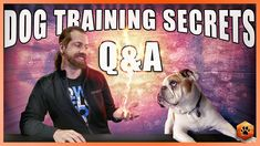 Secrets to Training the Perfect Dog Q&A with Ian Stone Puppy Training Tips, Dog Training Videos, Crate Training, Ian Stone, The Perfect Dog, The Secret, Dogs And Puppies, Your Pet, Pets