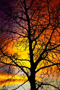 Colorful Silhouettes ♥ Sunrise and Sunsets - Fine Art Striking Photography Prints, Canvas Art and Stock Images by James Bo Insogna Beautiful Sunset, Beautiful World, Beautiful Scenery, Silhouettes, Perfect Day, All Nature, Mellow Yellow, Tree Of Life, Belle Photo