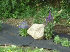 Granite with field sage and cone flower