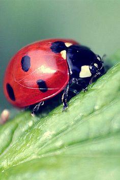 My favorite bugs