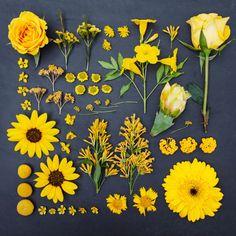 # Yellow - Cashmere Garden Collection Print- – Gelderner Garten Kollektion 10 x 10 drucken – Money Garden Collection Print -