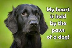 My Heart is held by the Paws of a Dog - Animal Quotes...