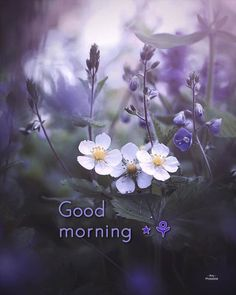 Good Morning, Plants, Buen Dia, Bonjour, Bom Dia, Flora, Plant