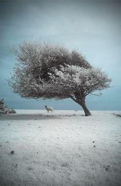 -i miss the snow... 3