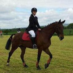 American Standardbred - Horse for loan 16h http://www.equineclassifieds.co.uk/Horse/horse-for-loan-16h-listing-241.aspx#.UlPK81OAUfQ