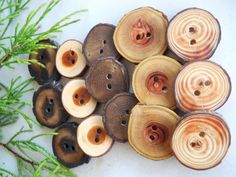 Wooden Tree Branch Wood Buttons Assortment 1 by TheHickoryTree