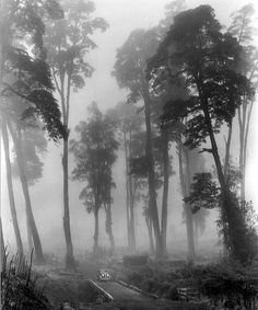 John Swope - Trees in Fog (Chile) by verylegalmuffin, via Flickr