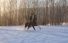 Your horses in the snow [PICS] - Horse & Hound Horse Pictures, Norway, Powder, Outdoors, Snow, Horses, Funny, Animals, Pictures Of Horses