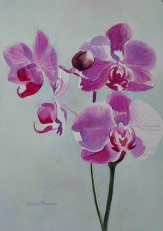 Violet Orchid Painting by Sharon Freeman - Violet Orchid Fine Art Prints and Posters for Sale