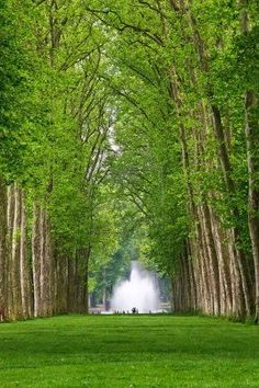Alley in the Park of Versailles, France