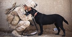 The best dog breeds for psychiatric service dogs can be trained to perform various tasks to help humans. Check the 5 best breeds here. War Dogs, Best Dog Breeds, Best Dogs, Psychiatric Service Dog, Education Canine, Therapy Dogs, Service Dogs, Training Your Dog, Dog Photos