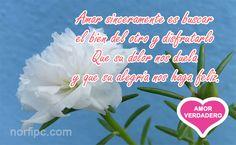 Amar sinceramente es buscar el bien del otro y disfrutarlo, que su dolor nos duela y que su alegría nos haga feliz