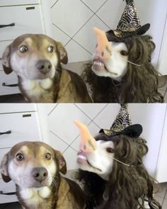 It's nearly #halloween