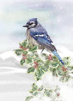 Eva Czapla - CC559_christmas_winter_bird_blue Jay