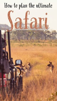 Tips for how to plan your very own African safari! This guide will get to travel and see all the best wildlife in South Africa, Tanzania, Kenya, and more!