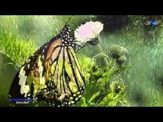 GIOVANNI MARRADI - Silent Rain - YouTube Romantic Music, Rain, Youtube, Rain Fall, Romanticism, Waterfall, Youtubers, Youtube Movies