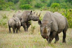 national-park-shoots-people-protects-rhinos-kaziranga-9