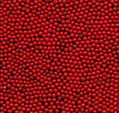 Ilex verticillata by horticultural art, via Flickr